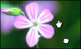 Moving image with hand cursor